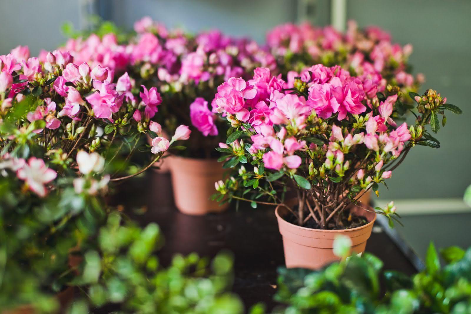 Фото цветы в срезе с названиями
