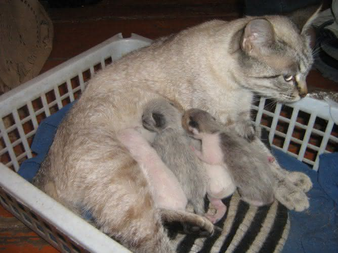 Кормящая кошка очень похудела
