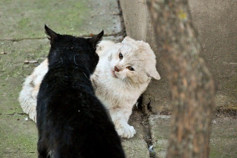 Как понять кошачий язык без переводчика