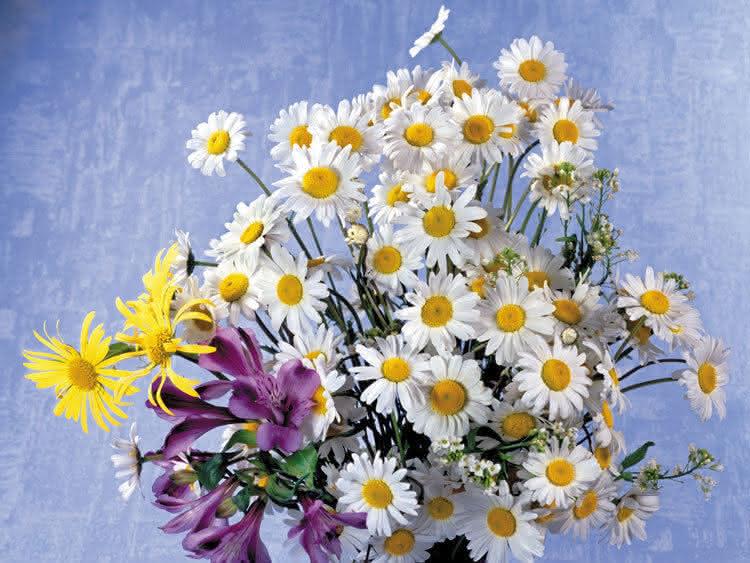 Пензе маленькие букеты полевых цветов купить цветов набережной
