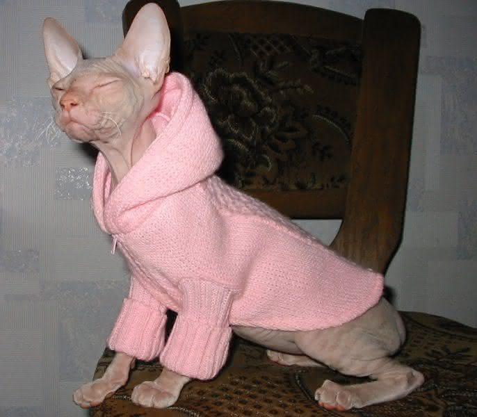 лысых своими руками для одежда кошек