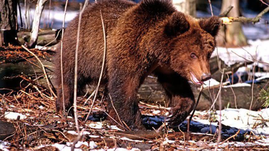использование животного мира кировской области